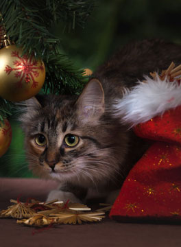 Cat under Christmas tree